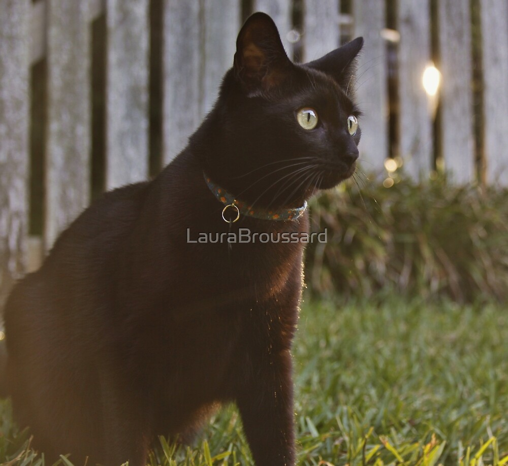 Omar at Dusk by LauraBroussard