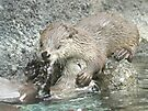 Fun and otters by Anthony Brewer