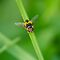 2nd of December - HOVERFLY