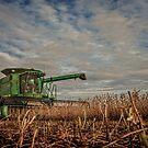 Bean Harvest by Steve Baird