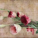 Lisianthus  by Irene  Burdell
