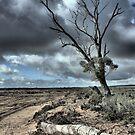 Drought & Salt Kills by Larry Lingard-Davis