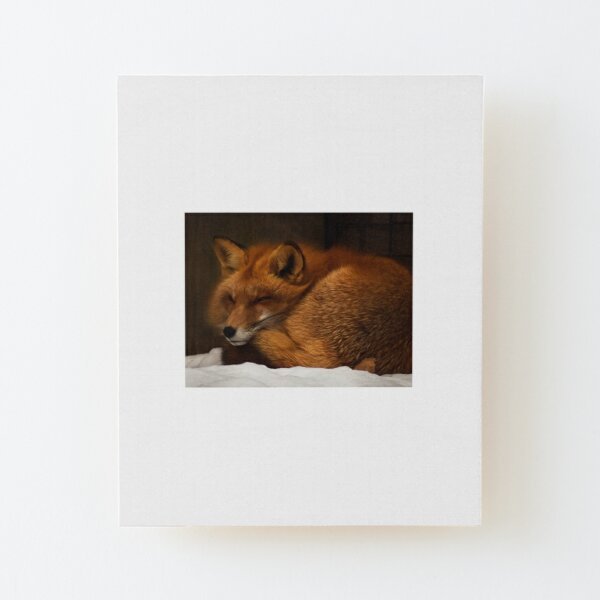 Fox Snuggled in the Snow Wood Mounted Print
