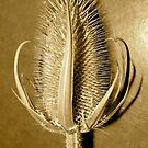 the mighty teasel by evon ski