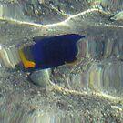 Fish at my Feet by Chris Baker