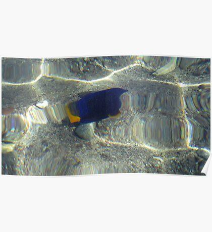 Fish at my Feet Poster