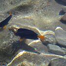 Fish at my Feet 5 by Chris Baker