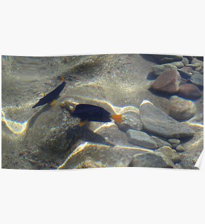 Fish at my Feet 5 Poster