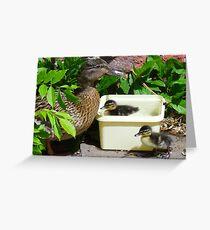 Ducklings bathing in an ice-cream tub! Greeting Card