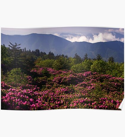 Mountain Rhododendrons Poster