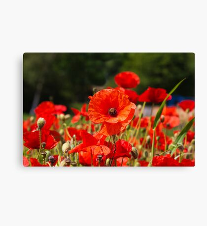Nature Scape Poppies Canvas Print