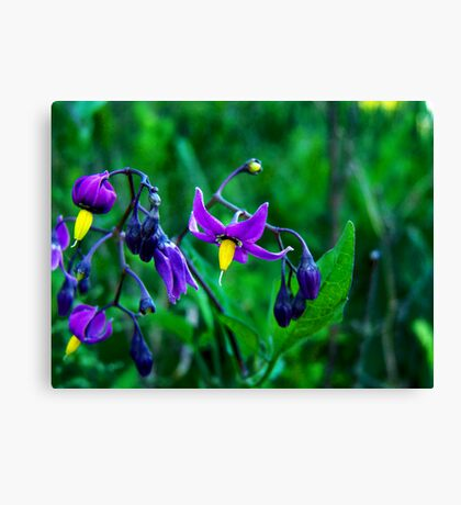 Bittersweet Nightshade Canvas Print