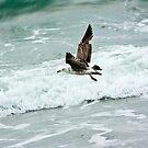 Great Black-back Gull by ifreedman