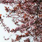 French Blossoms II by Danika & Scott Bennett-McLeish