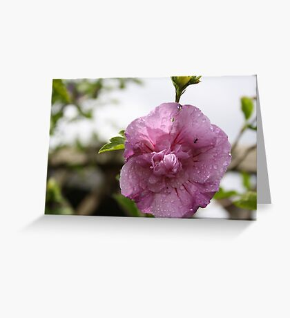 ANT IN FLOWER  Greeting Card