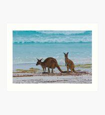 Beach Roos - Lucky Bay - Cape Le Grande - WA Art Print