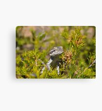 Perched Reptile Canvas Print