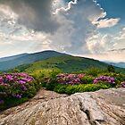 Roan Mountain Rays - Jane Bald Landscape by Dave Allen