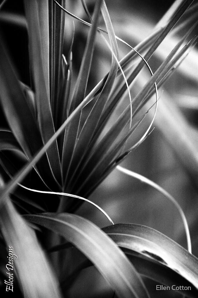 Luscious Lines by Ellen Cotton