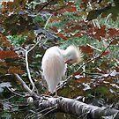 Stork in a tree by Toby  hefford