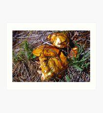 mushroom macro Art Print
