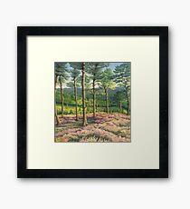 Evening Sun, Surrey Hills Pine Trees Framed Print