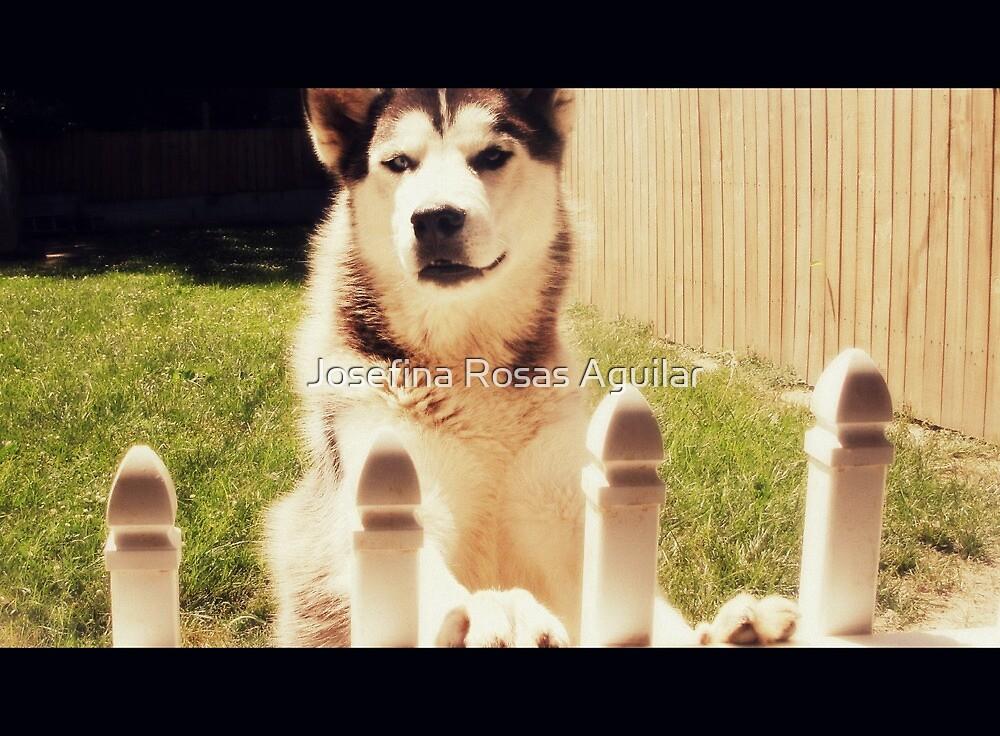 Dog Days by Josefina Rosas Aguilar
