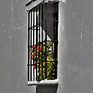 Spanish Window by dgbimages