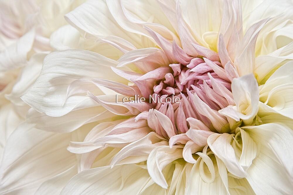Delicate Exuberance by Leslie Nicole