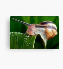 The Magical Kingdom of Snails Canvas Print