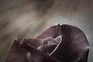 scent of a rose by Anthony Mancuso