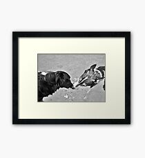 Collie Kisses Framed Print