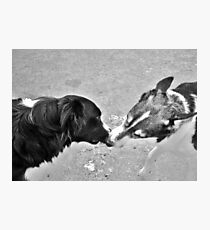 Collie Kisses Photographic Print