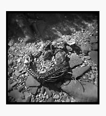 Dead things #02 Photographic Print