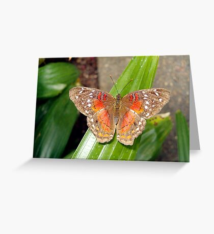 Brown and Orange Butterfly Greeting Card
