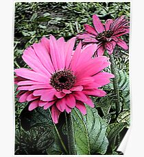 Summer Afternoon Daisies Poster