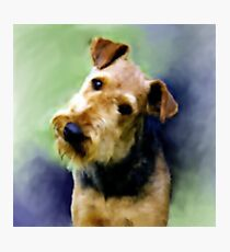 Curious Airedale Fotodruck