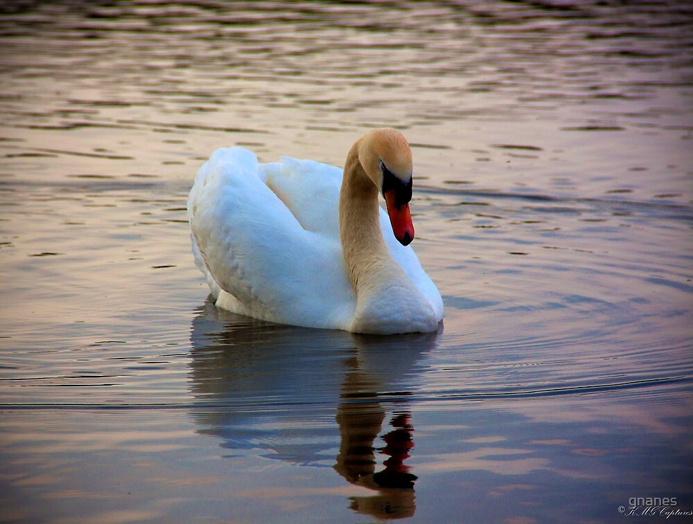 The Sleeping beauty - Swan in dream world by gnanes