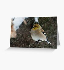 Goldfinch in Winter Plumage Greeting Card