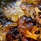 """Bubbles and leaves. by Alexa """"Lexi"""" Platts"""