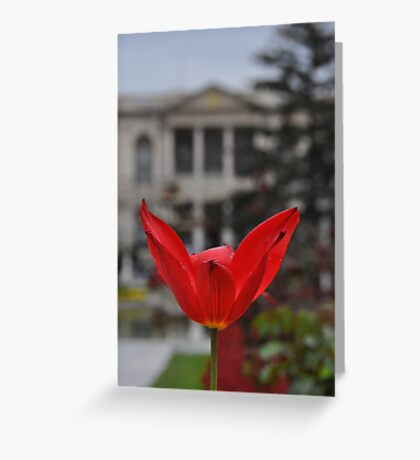 Tulip and Palace Greeting Card