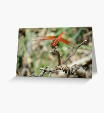 Red skimmer dragonfly Greeting Card
