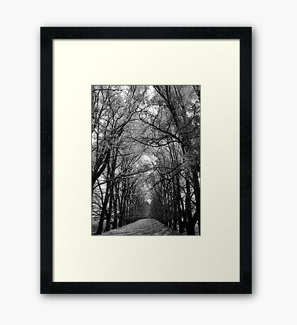 Into the Trees Framed Print