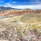 Painted Hills - Spring by CarrieAnn