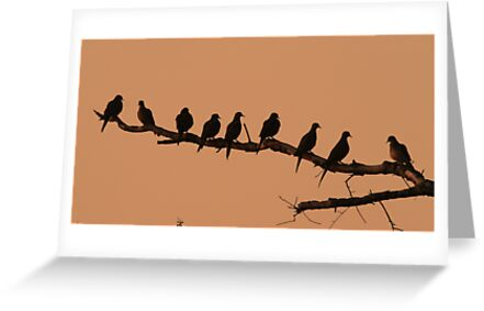 Doves in silhouette ! by jozi1