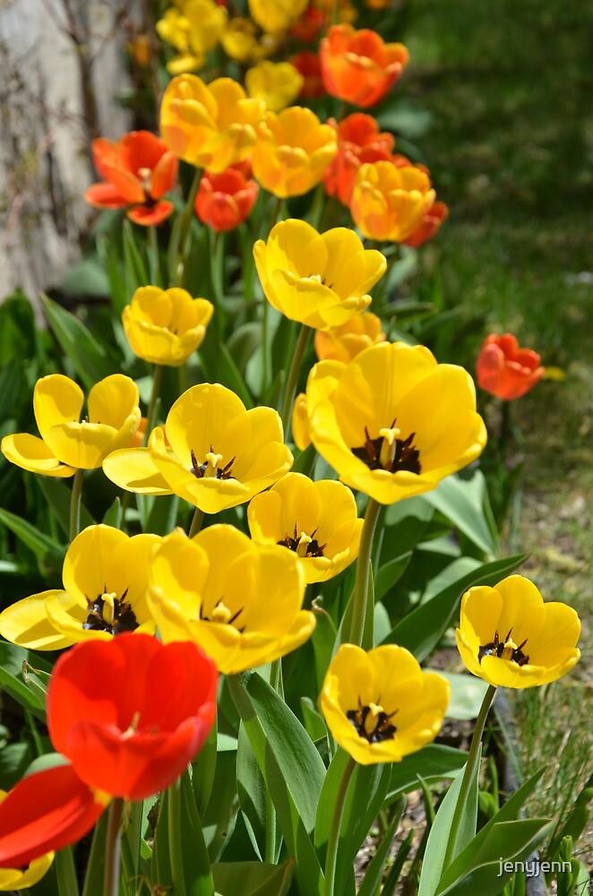 tulips by jenyjenn