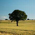 Lonely tree by Matt Sillence