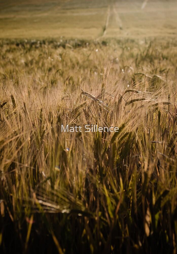 Wheat field by Matt Sillence