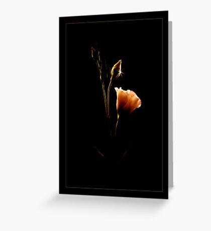 From Shadows To Light  Greeting Card