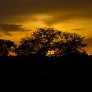 Scenic sunset! by vasu